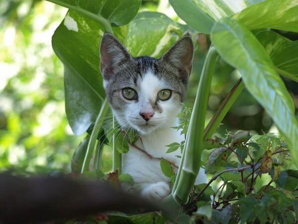 giftig växter katter