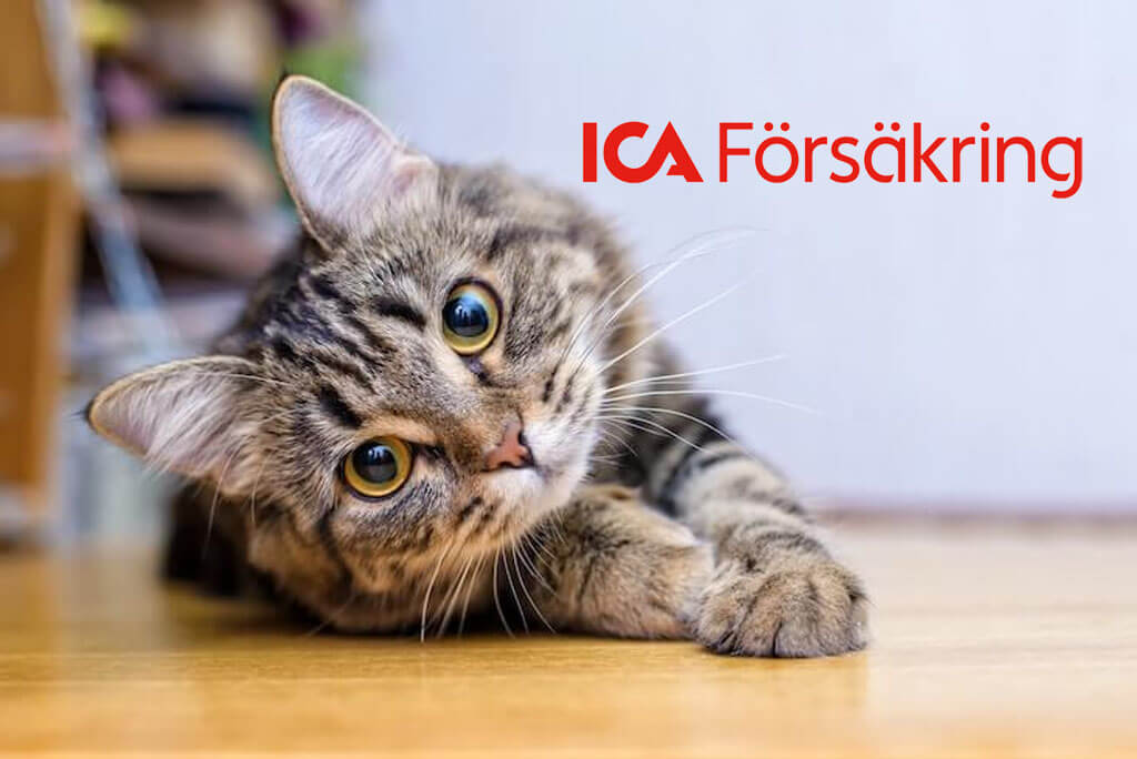 ica kattförsäkring katt