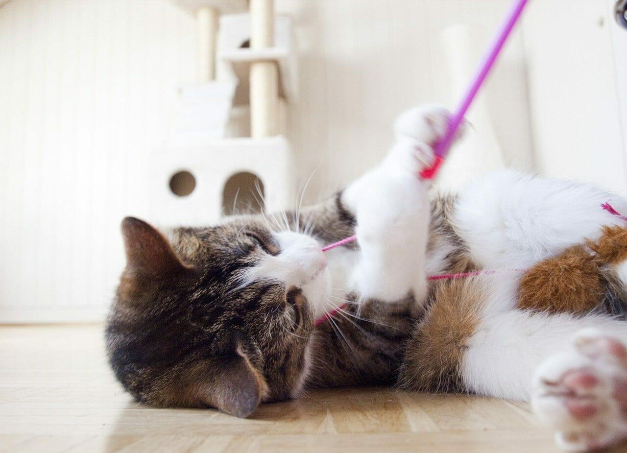 leksaker till katt