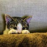trygg katt forsakring