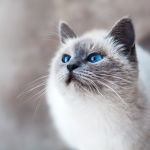 Allergi Katt