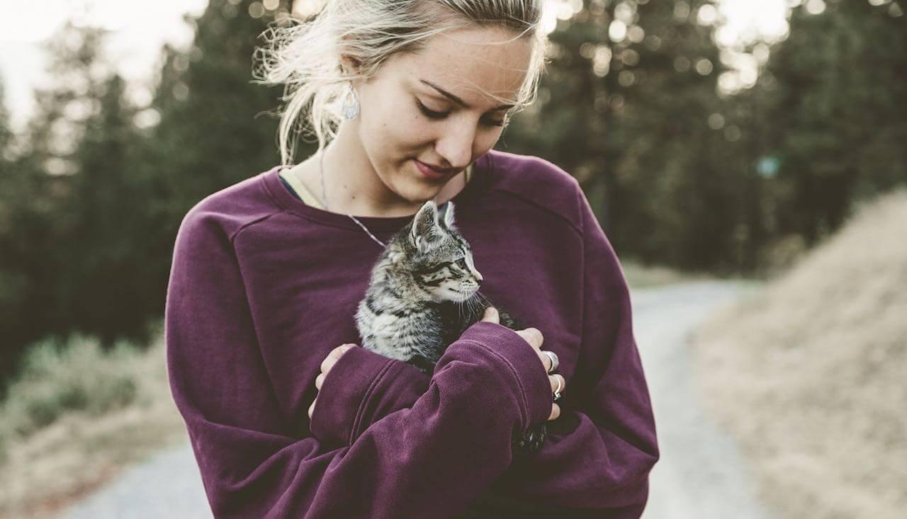 kattsjukdomar fem vanliga