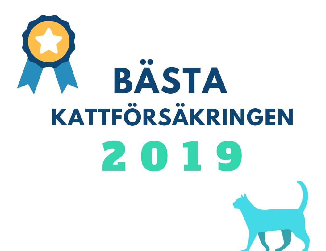 bäst kattforsäkring 2019