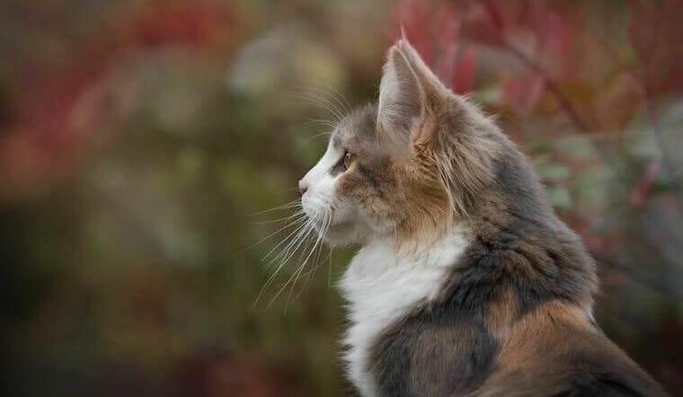 gammal katt