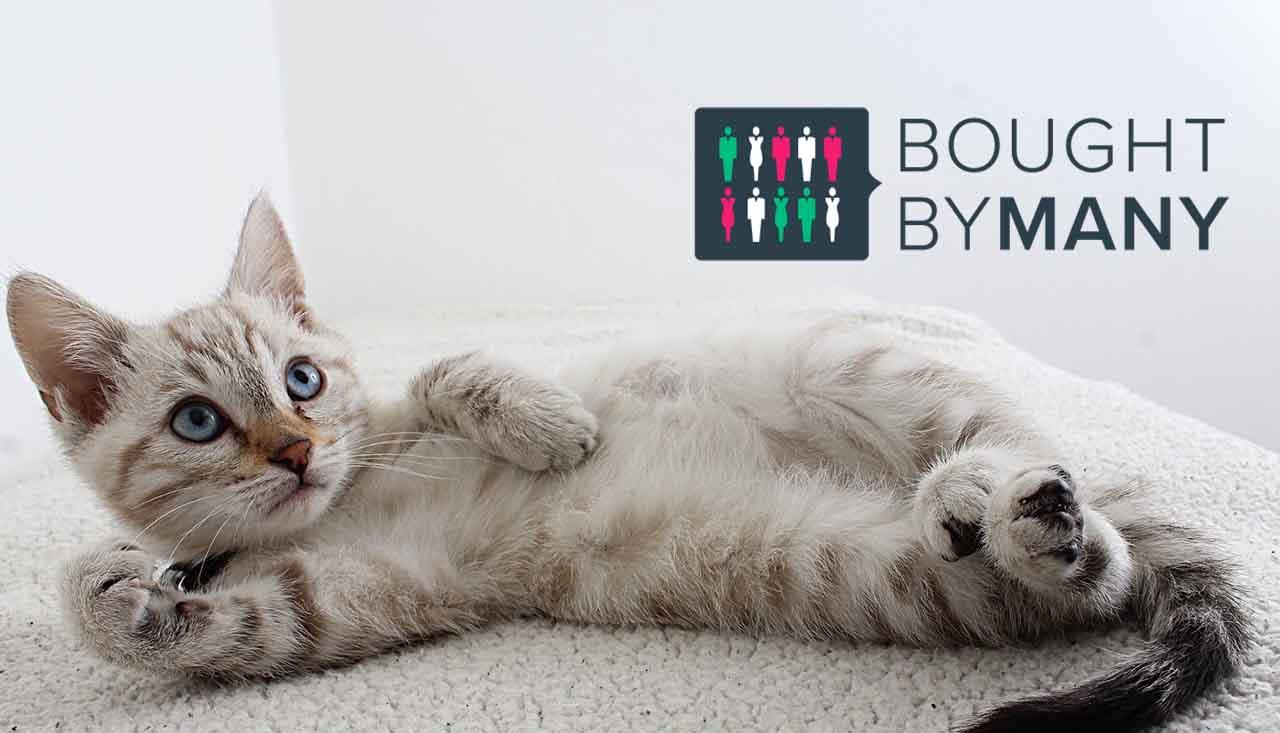 bought-by-many katt bakgrund